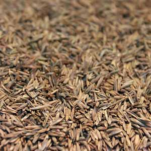 Cincinnati Grass Seed Supply